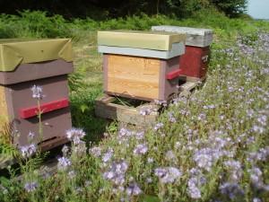 Quant il y a de la ressource florale !Photo Christian