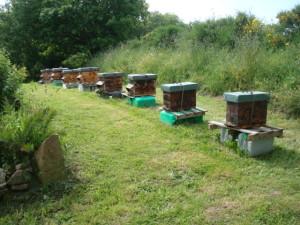 Et que les ruchers sont propres ! Photo JP Le Dantec